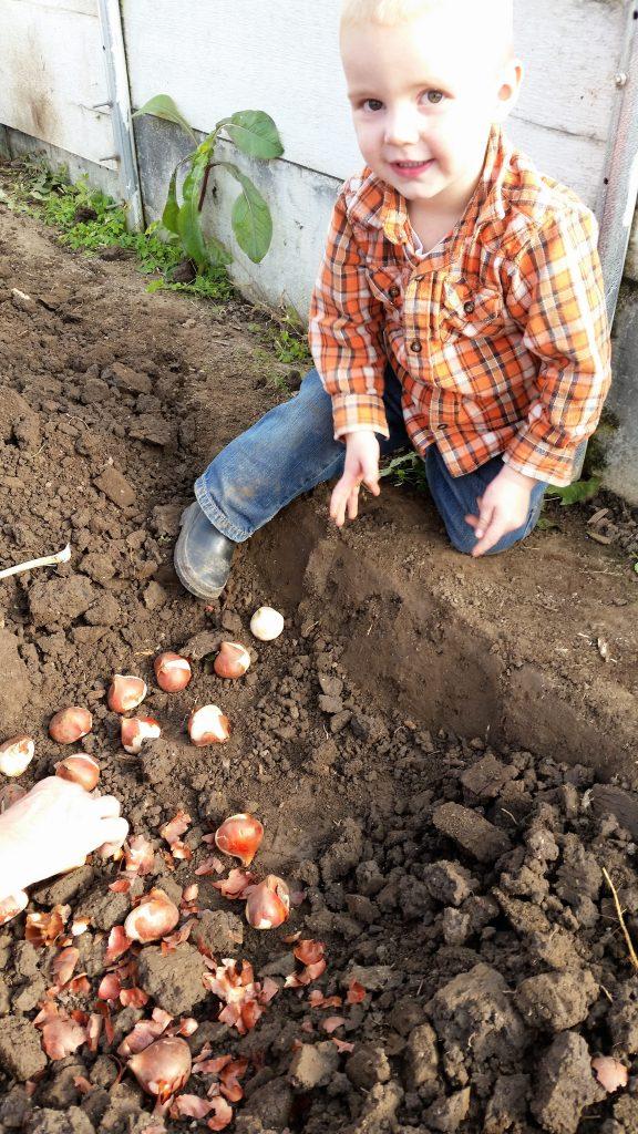 Aiden planting Tulips