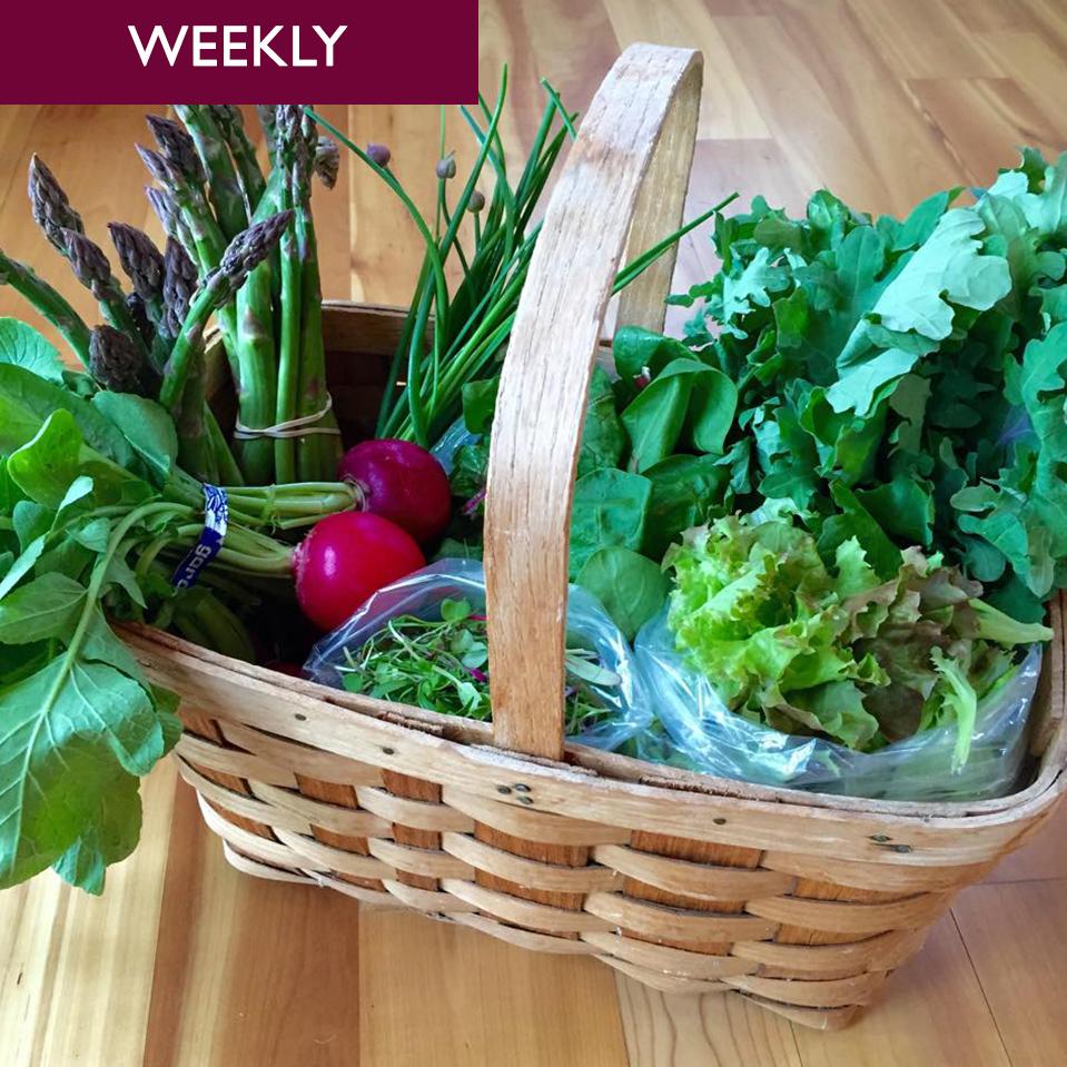 Veggie Club – Weekly